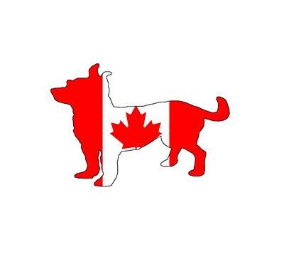 Chihuahua Digital Art - Chihuahua Canada by Mordax Furittus