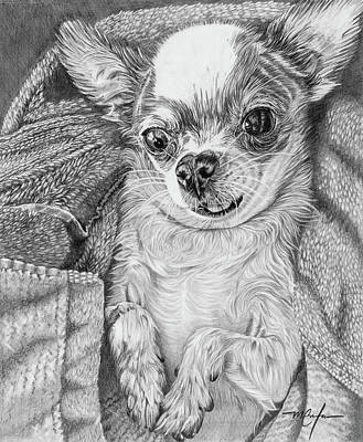 Drawing - Chihuahua by Dan Menta