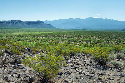 Photograph - Chihuahuan Desert by James Barber