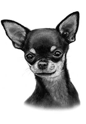 Chihuahua Painting - Chihuahua Drawing by Danguole Serstinskaja