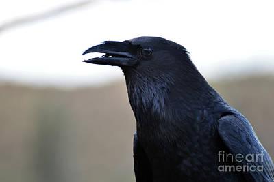 Chihuahua Raven Profile Art Print