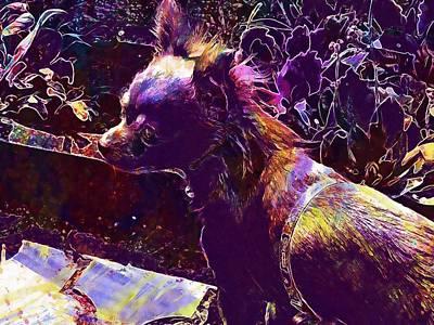 Chihuahua Digital Art - Chihuahua She Animal Pet  by PixBreak Art