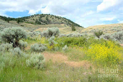 Photograph - Chilcotin Hills by Frank Townsley
