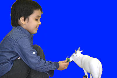Photograph - Child And Cow by Anand Swaroop Manchiraju