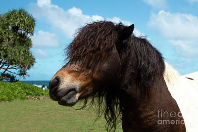 Photograph - Child Of The Sun Keanae Pony Love by Sharon Mau