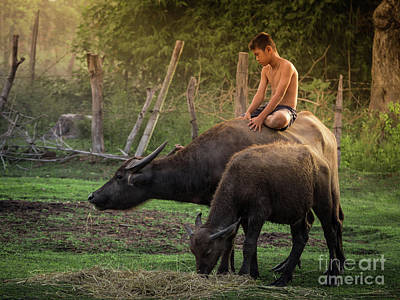 Art Print featuring the photograph Child Riding Buffalo In Countryside Thailand. by Tosporn Preede