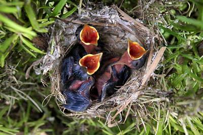 Photograph - Children Already Born by Goyo Ambrosio