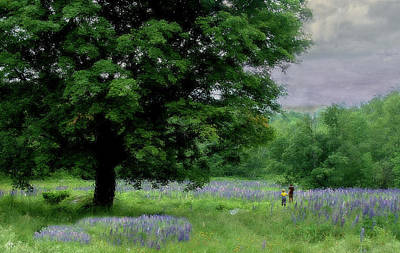 Photograph - Childs Walk Through Lupine by Wayne King
