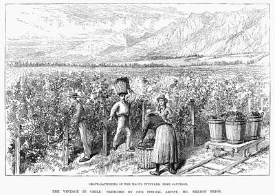Chile: Wine Harvest, 1889 Art Print