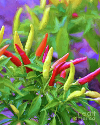 Photograph - Chili Pepper Art by Kerri Farley