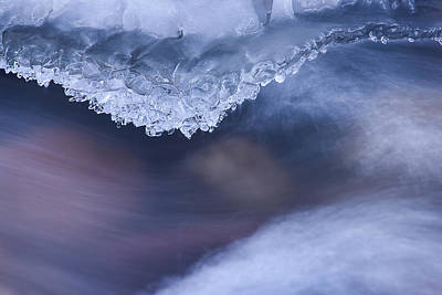 Photograph - Chilled Teeth by Michael Blanchette
