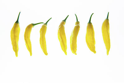 Chillie Photograph - Chillies Lined Up by Helen Northcott