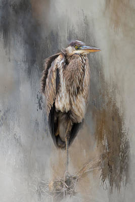 Blue Herron Photograph - Chillin by Cindy Archbell