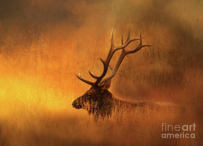 Photograph - Chillin' Elk by Clare VanderVeen