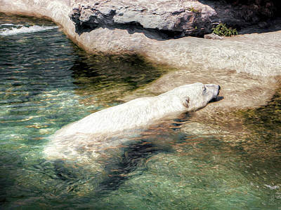 Photograph - Chillin' Polar Bear by Pennie  McCracken