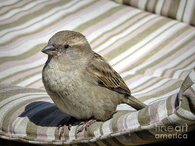 Crossbill Wall Art - Photograph - Chilling In Majorca by Elisabeth Lucas
