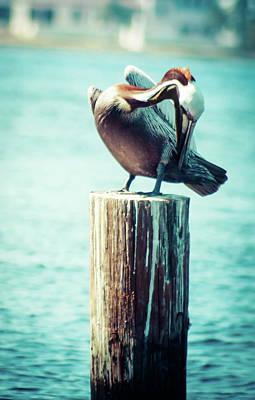 Photograph - Chilling Pelican  by Debra Forand