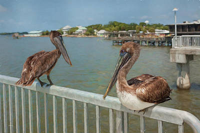 Photograph - Chilling Pelicans by John M Bailey