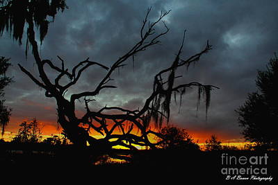 Photograph - Chilling Sunset by Barbara Bowen