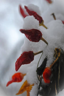 Photograph - Chilly Peppers by Laura DAddona