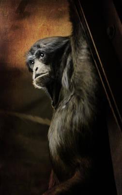 Photograph - Chimp 1 by Susan  McMenamin