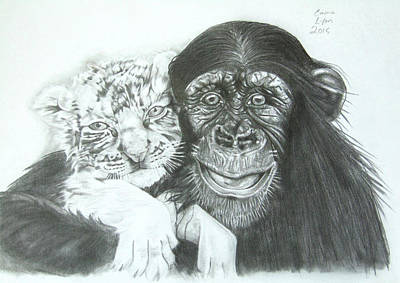 Drawing - Chimp And White Tiger Cub by Emma Lyon