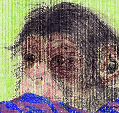 Chimpanzee Drawing - Chimp With Blanket by Julie L Hoddinott