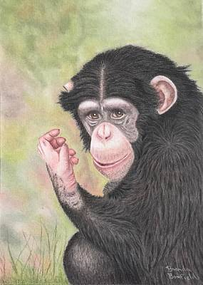 Pastel - Chimpanzee by Brenda Bonfield