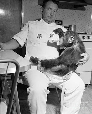 Photograph - Chimpanzee Enos Enjoys A Nice Cuppa After A Hard Days Astronaut Traing by R Muirhead Art