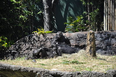 Art Print featuring the photograph Chimps At Rest by John Black