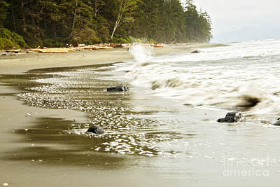 Photograph - China Beach, British Columbia by Cendrine Marrouat