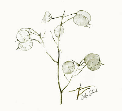 Cahill Drawing - China Leaves by Orla Cahill