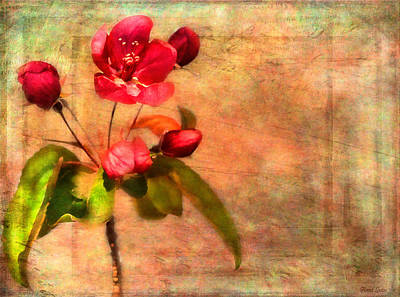 Photograph - Chinaberry Tree Blossoms by Anna Louise