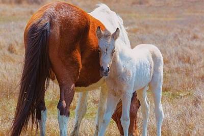 Photograph - Chincoteague Mare And Foal by Pete Federico