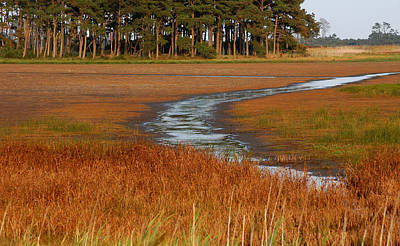 Photograph - Chincoteague by Pat Exum