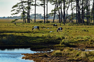 Photograph - Chincoteague Ponies by Nicole Lewis