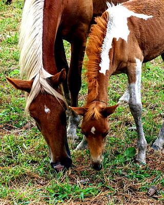 Photograph - Chincoteague Wild Horses Mare And Pony Horses Eastern Shore Virginia by Katy Hawk