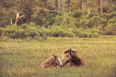 Photograph - Chincoteague Ponies by Richard Macquade