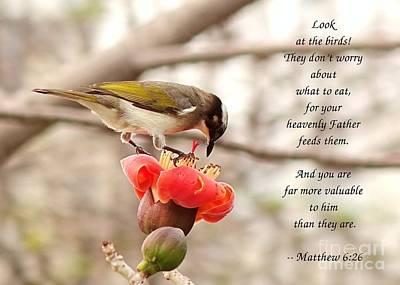Photograph - Chinese Bulbul Bird Scripture Card by Yali Shi