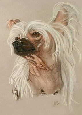 Drawing - Chinese Crested Portrait by Barbara Keith
