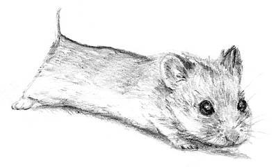Hamster Drawing - Chinese Dwarf by Zarah Runtukahu