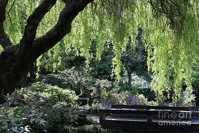 Photograph - Chinese Garden by Wilko Van de Kamp