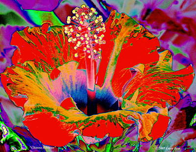 Digital Art - Chinese Hibiscus by Larry Beat
