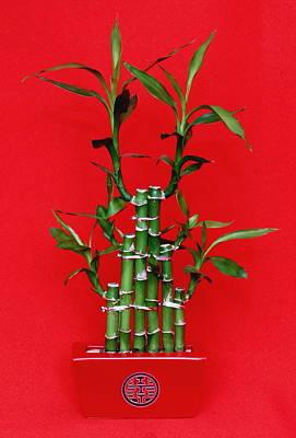 Chinese Luck Bamboo Art Print