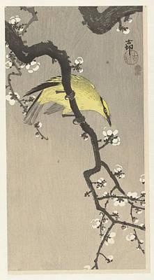 Orientalist Painting - Chinese Oriole On Pruimenbloesemtak by Ohara Koson and Akiyama Buemon