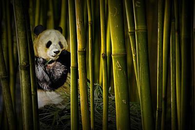 Photograph - Chinese Panda Bear Among The Bamboo Trees by Randall Nyhof