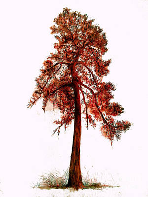 Drawing - Chinese Pine Tree Drawing by Maja Sokolowska