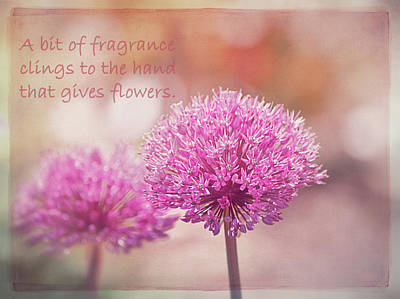 Photograph - Chinese Proverb  by Maria Angelica Maira