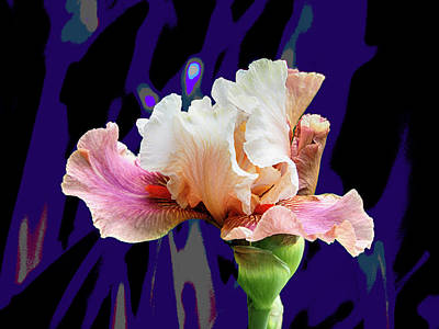 Photograph - Chinese Treasure Iris by C H Apperson