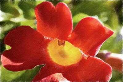 Gloxinias Photograph - Chinese Trumpet Flower In La Mesa California by Kenneth Roberts
